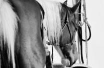 Horse Stare #4